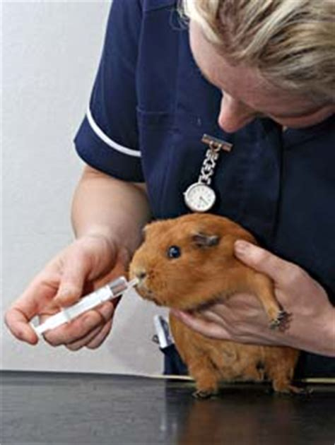 veterinary assistants  laboratory animal caretakers