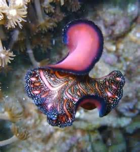 Indonesia Sea Creature