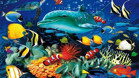 Marine Animal Wallpaper - marine wallpaper wallpapersafari