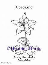 Columbine Rocky Coloring Mountain State Flower Colorado Flowers Usa Symbols Tattoo Mountains sketch template