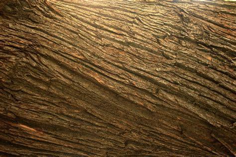 Images Gratuites : arbre, la nature, Roche, bois, texture