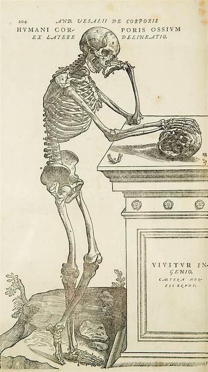 Anatomy Wikipedia Vesalius Copy