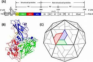 Increasing Type 1 Poliovirus Capsid Stability By Thermal Selection