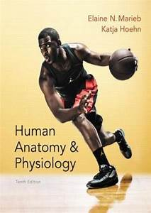 Marieb Anatomy And Physiology 10th Edition Pdf Free