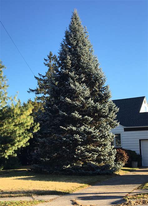 collection of christmas trees union nj christmas tree