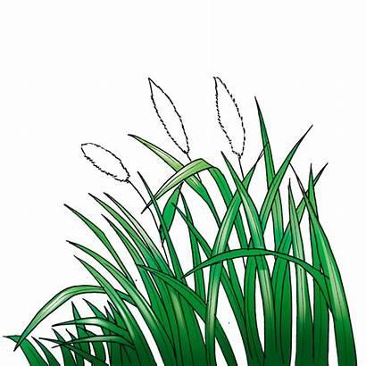 Rumput Gambar Kartun Sketsa Grass Cartoon Tanaman
