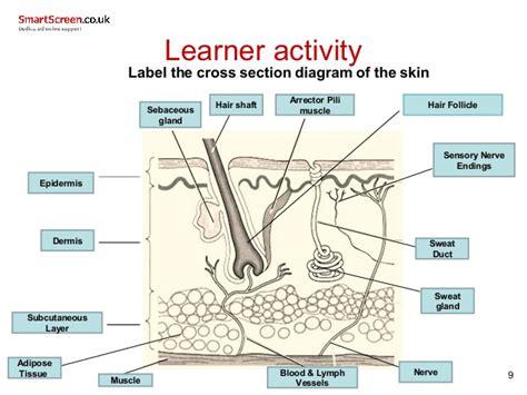 Skin Cell Diagram Label by Smartscreen Skin 2