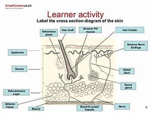 Smartscreen Skin 2