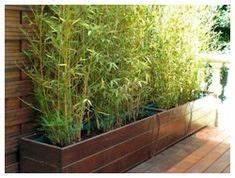 haie de bambous en pots exterieur pinterest pots With idee amenagement jardin paysager 1 haie de bambous une idee de plus en plus seduisante
