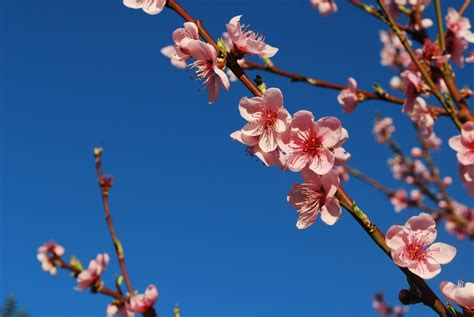 Free Images : branch plant sky flower petal bloom