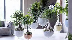 De Grandes Plantes Dintrieur Pour Janvier