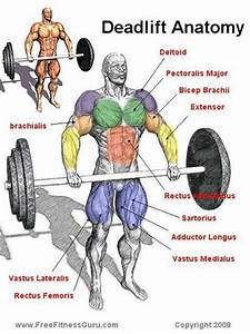 Why You Should Deadlift