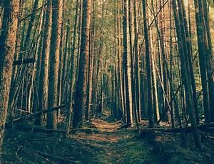 Testimonials | Kootenai Forest Stakeholders Coalition