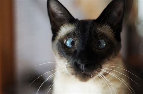 32 Pawsome Facts About Cats