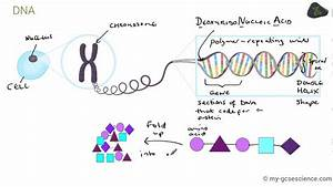 Gcse Biology Dna And The Genome  Aqa 9-1