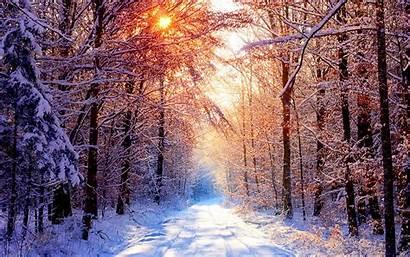 Winter Snow Nature Trees Road Desktop Wallpapers