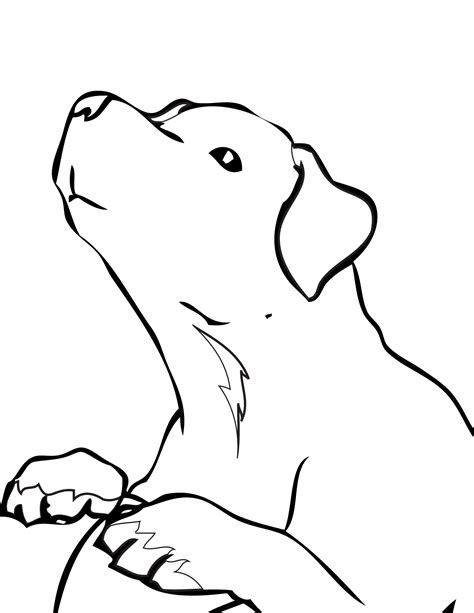 labrador coloring pages black lab coloring pages