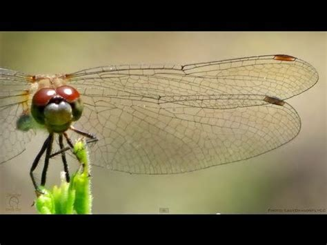 dragonfly wings  slow motion smarter  day