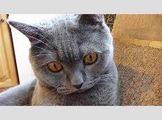 Lustige Katze Musikvideo Katze tanzt und singt Teil 1