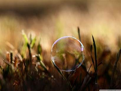 Soap Bubble Grass