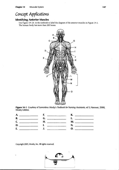 human anatomy labeling worksheets human body muscle diagram worksheet human anatomy diagram