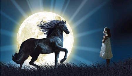 pferdemagazin pferd und pferdefreundepferd und