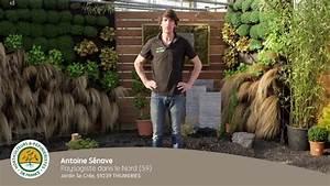 Cloturer Son Jardin Pas Cher : comment cr er et mettre en place un jardin zen youtube ~ Melissatoandfro.com Idées de Décoration