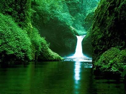 Forest Waterfall Tropical Rain Rainforest Waterfalls Nature