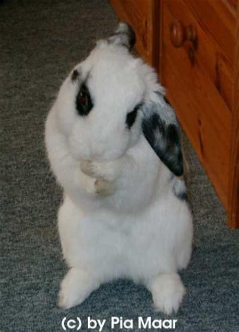 kaninchen info verhalten