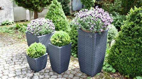 terrasse bepflanzen tolle inspirationen bei westwing