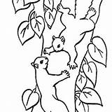 Squirrel Tree Climbing Coloring Drawing Nut Pages Line Oak Drawings Related Clipartmag Getdrawings sketch template