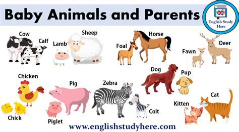 animal names goldenacresdogscom