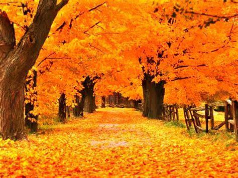 autumn screensavers wallpapers wallpaper cave
