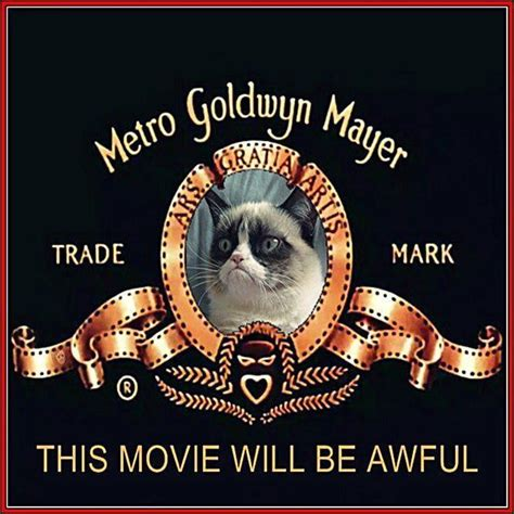 Grumpy Cat Signs A Hollywood Movie Deal, Still Not