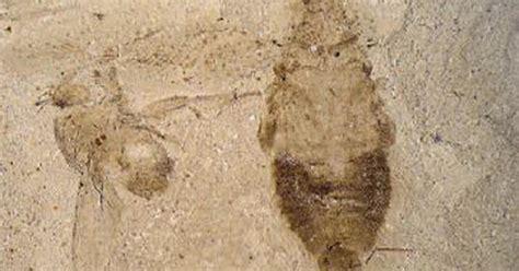 million year  cockroach fossil  cbs news