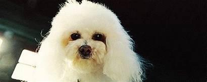 Dog Breed Breeds Bourbon Hispanic Minority Ever