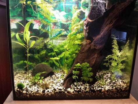 gallon fish tank setup   required information
