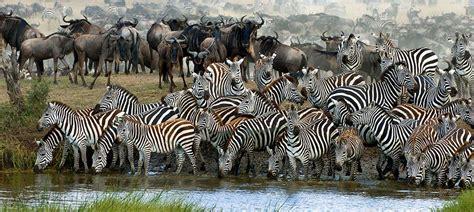 Experience an African Safari - Wilderness Travel