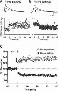 Homosynaptic Ltp And Heterosynaptic Ltd In Visual Cortex