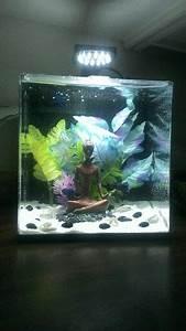 Deco Aquarium Zen : 126 best i want a betta images on pinterest fish ~ Melissatoandfro.com Idées de Décoration