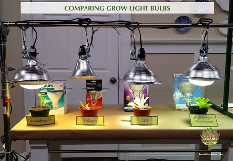 grow lights for beginners start plants indoors the