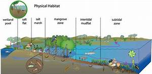 Conceptual Diagram Of Physical Habitat Process