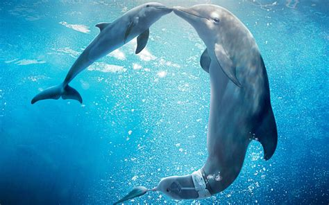 dolphin wallpaper dolphin wallpapers hd pictures one hd wallpaper pictures Underwater