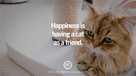 Pictures With Quotes 25 Cat Images With Quotes For Cat