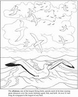 Coloring Albatross Pages Colouring Books Mer Coloriages Getdrawings Adult Drawings sketch template