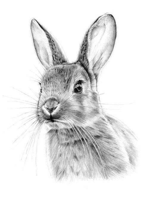 immagini da disegnare a matita immagini da disegnare a matita disegno di un coniglio