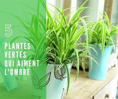 plante verte interieur ombre 28 images plante tropicale d ombre chouchouter ses plantes d