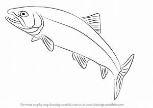 Learn How to Draw a Trout (Fishes) Step by Step : Drawing ...