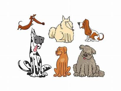 Clipart Breed Dog Matter Canine Mixed Does