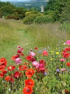 The Wild Flower Meadow with Poppies | Okay Wallpaper